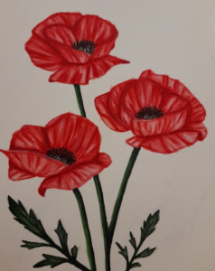 Red poppies with green stems on a white background, hand painted by a Guide