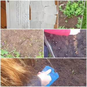 A selection of images showing things growing